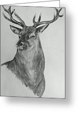 A Stag Drawing Greeting Card by Vicky  Hutton