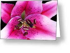 A Star Is Born - Pink Stargazer Lily by Sharon Cummings Greeting Card by Sharon Cummings