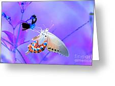 A Strange Butterfly Dream Greeting Card by Kim Pate