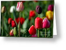A Tapestry Of Tulips Greeting Card by Nick  Boren