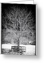 A Tree In The Snow Greeting Card by John Rizzuto
