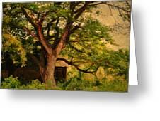 A Tree Greeting Card by Jenny Rainbow