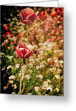 A Tulip's Daydream Greeting Card by Loriental Photography