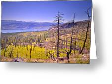 A View From Okanagan Mountain Greeting Card by Tara Turner
