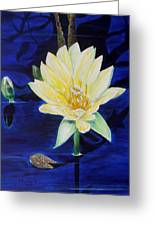 A Waterlily Greeting Card by Marilyn  McNish