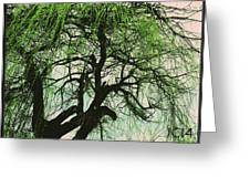 A Wise Tree Greeting Card by Jeremiah Colley