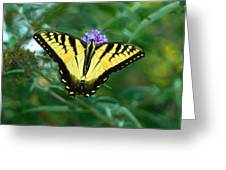 A Yellow Butterfly Greeting Card by Raymond Salani III