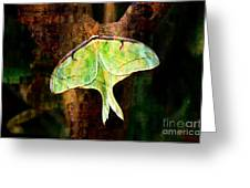 Abstract Luna Moth Painterly Greeting Card by Andee Design