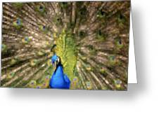 Abstract Peacock Digital Artwork Greeting Card by Georgeta Blanaru