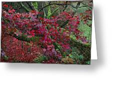 Acer Chatsworth Gardens Greeting Card by Jerry Daniel