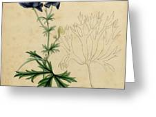 Aconitum Napellus by Sowerby Greeting Card by Philip Ralley