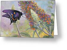 Admiral Butterfly Greeting Card by John Zaccheo