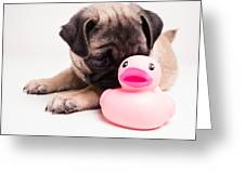 Adorable Pug Puppy With Pink Rubber Ducky Greeting Card by Edward Fielding