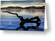 Adrift Reflection Greeting Card by Cheryl Young