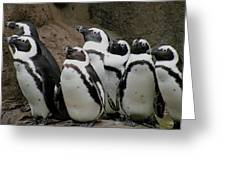 African Penguins Greeting Card by Brian Chase