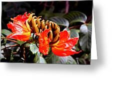 African Tulips Greeting Card by Karon Melillo DeVega