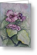 African Violets Greeting Card by Rebecca Matthews