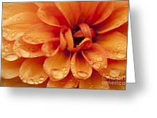 After The Rain Greeting Card by Anne Gilbert