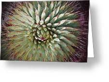 Agave Spikes Greeting Card by Alan Socolik