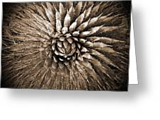 Agave Spikes Sepia Greeting Card by Alan Socolik
