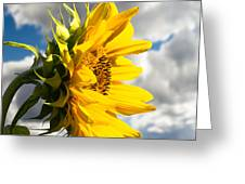 Ah Sunflower Greeting Card by Bob Orsillo