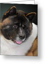 Akita - A Dog's Tale Greeting Card by Christine Till