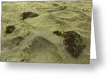 Algea Left On The Sand Greeting Card by Sandra Pena de Ortiz
