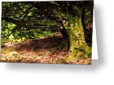 Alive Memory Of Thetrees. Glendalough. Ireland Greeting Card by Jenny Rainbow