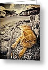 Alley Cat Siesta In Grunge Greeting Card by Meirion Matthias