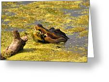 Alligator Ambush Greeting Card by Al Powell Photography USA
