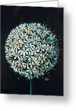 Allium Greeting Card by Lynette Yencho