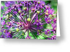 Allium Series - Close Up Greeting Card by Moon Stumpp