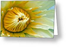 Almost Greeting Card by Karen Walzer