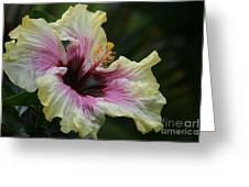 Aloha Aloalo Tropical Hibiscus Haiku Maui Hawaii Greeting Card by Sharon Mau