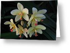 Aloha Greeting Card by Ange Sylvestri