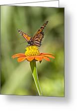 Aloha Monarch Greeting Card by Charlie Osborn