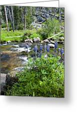 Along The River Greeting Card by Fran Riley