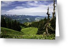 Alpine Meadow Greeting Card by Joanna Madloch