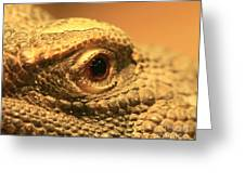 Always Watch Your Back - Benti Uromastyx Lizard Greeting Card by Inspired Nature Photography By Shelley Myke