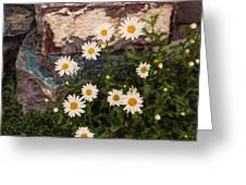Amazing Daisies Greeting Card by Omaste Witkowski