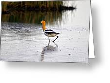 American Avocet Greeting Card by Al Powell Photography USA