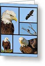 American Bald Eagle Collage Greeting Card by Dawn Currie