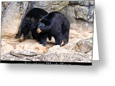 American Black Bear  Greeting Card by Chris Flees