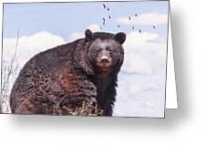 American Black Bear Greeting Card by Janice Rae Pariza