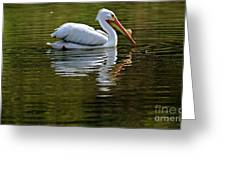 American White Pelican Greeting Card by Elizabeth Winter