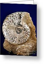 Ammonite Fossil Greeting Card by Scott Camazine