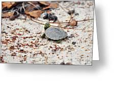 Among Acorns Greeting Card by Al Powell Photography USA