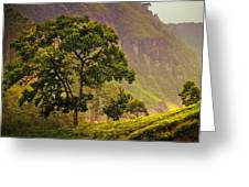 Among The Mountains And Tea Plantations. Nuwara Eliya. Sri Lanka Greeting Card by Jenny Rainbow