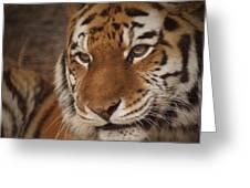 Amur Tiger 4 Greeting Card by Ernie Echols