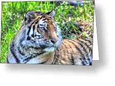 Amur Tiger 5 Greeting Card by Jimmy Ostgard